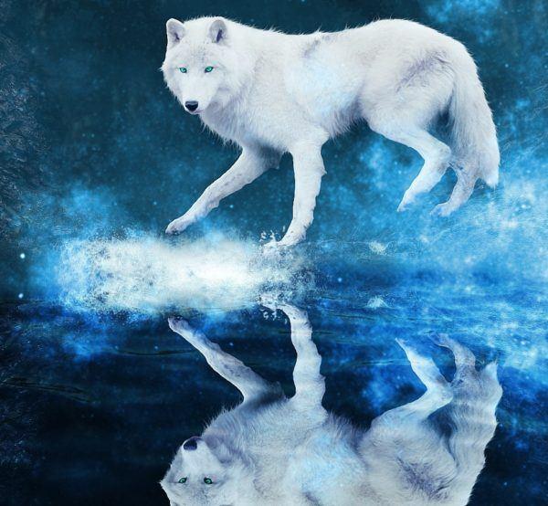 Qué Significa Soñar Con Lobos Esoterismoscom