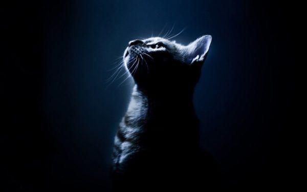 significado-de-soñar-con-gatos