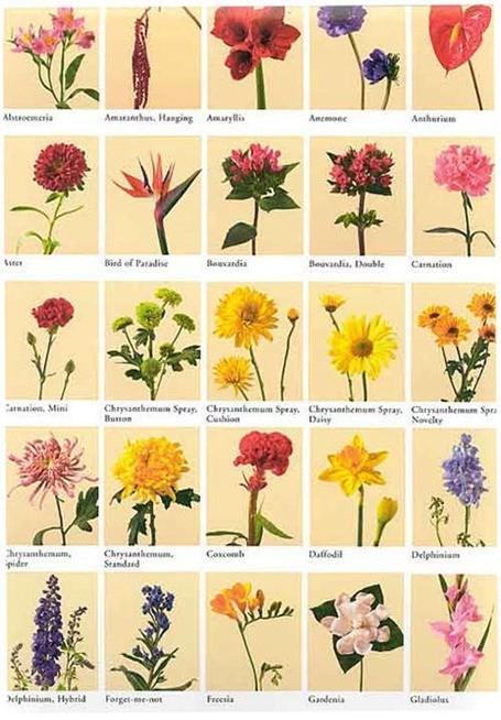 Color Flores Significado Esoterismoscom
