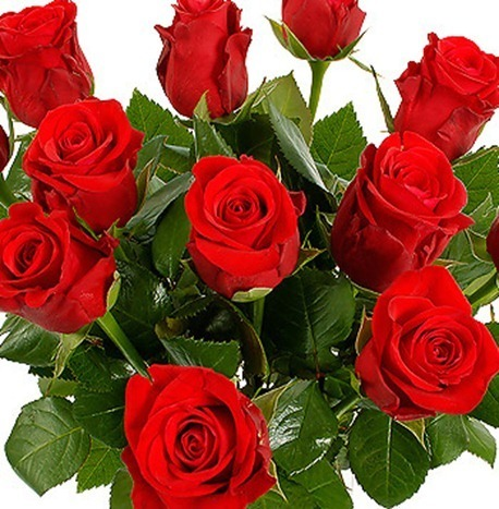 8447-a-dozen-red-roses