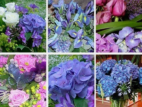 blue-flower-collection-51