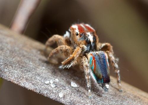 significado-de-soñar-con-arañas
