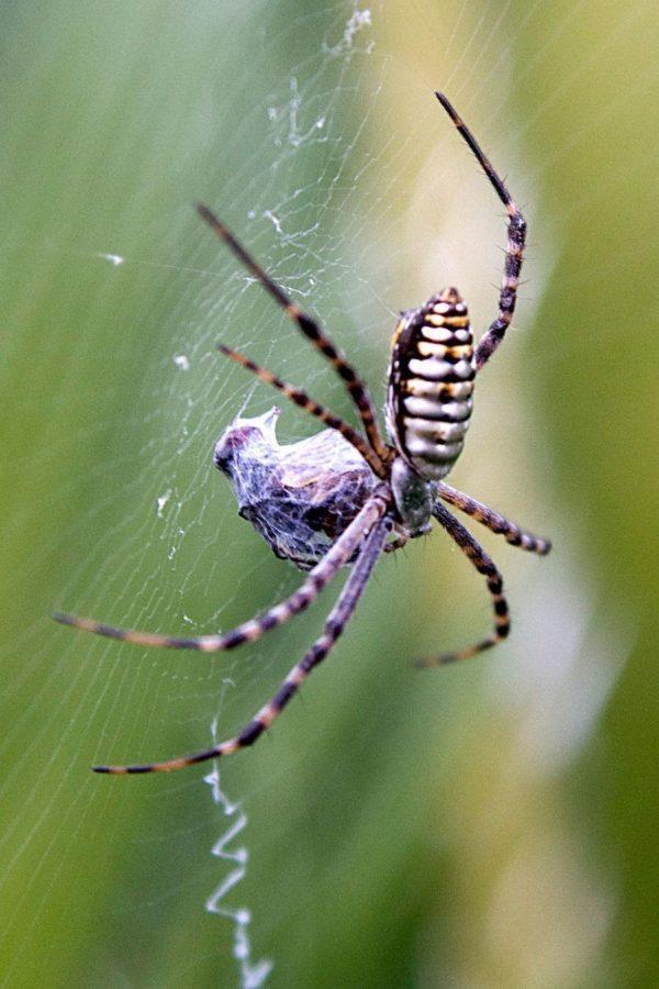 soñar-que-matas-una-araña