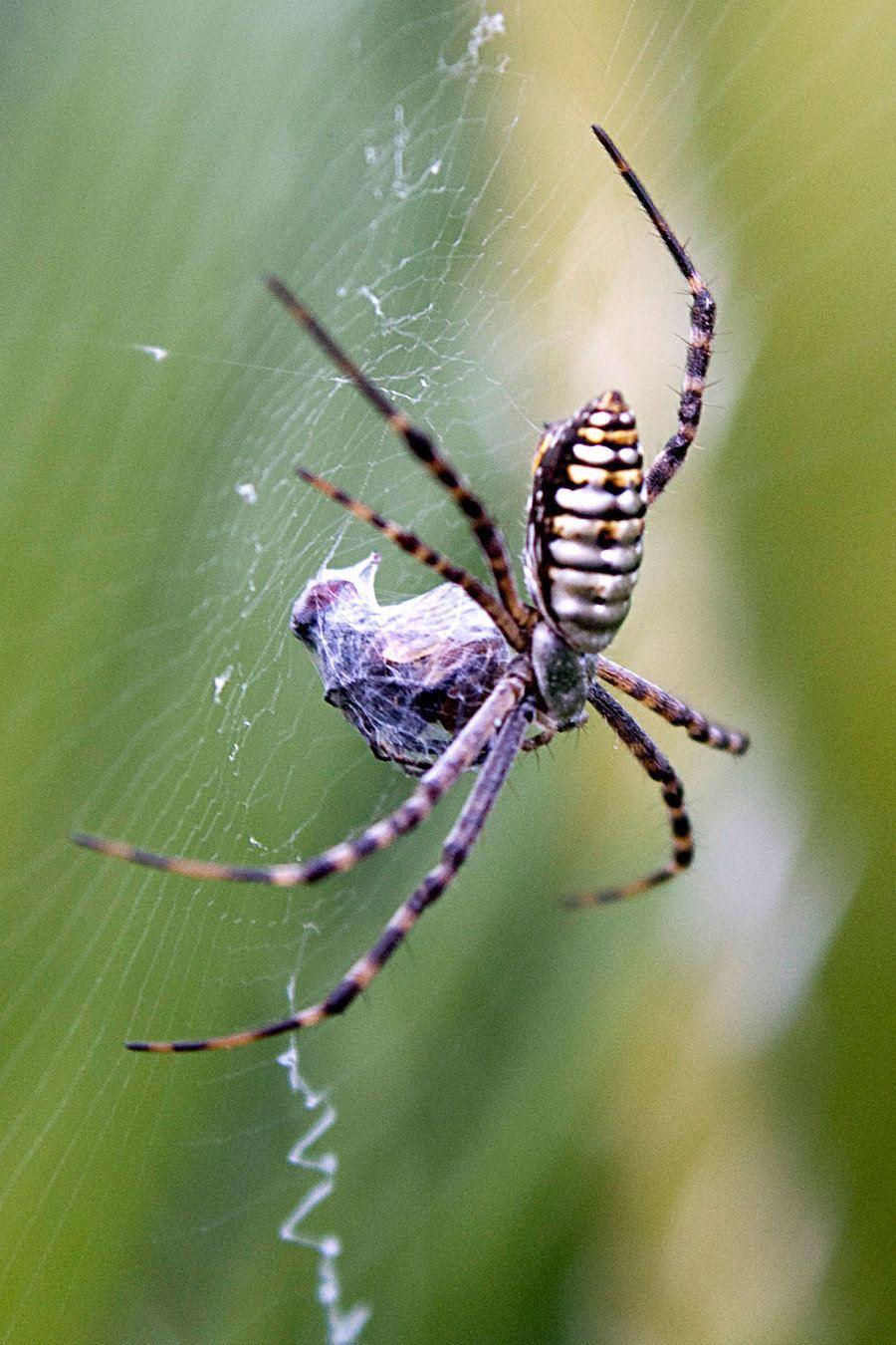 Significado de soñar con arañas | Esoterismos.com