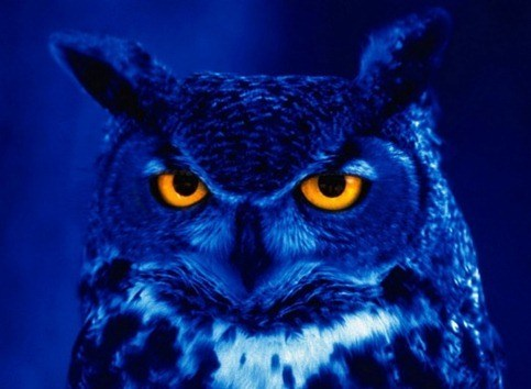 owls_screensaver
