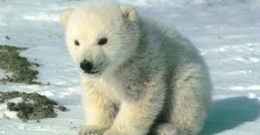 Qué significa soñar con osos | Significado de los sueños