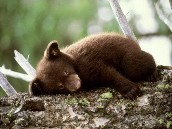 soñar-con-osos-significados