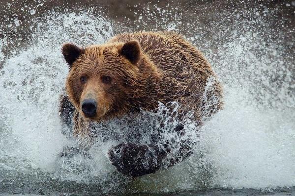 Soar con osos  Esoterismoscom