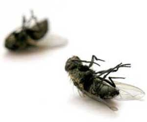 soñar-que-matamos-una-mosca