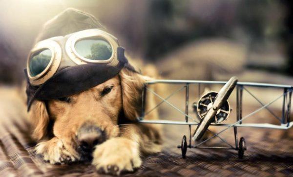 que-significa-soñar-con-perros