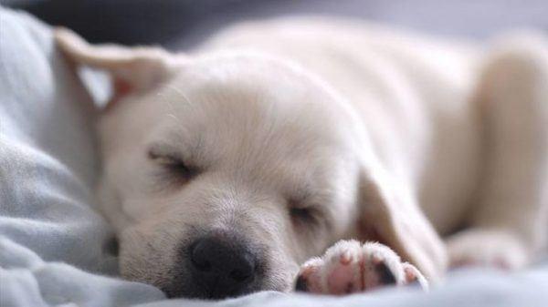 significado-de-soñar-con-perros