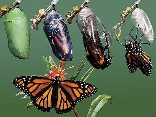 soñar-con-gusanos-que-se-convierten-en-mariposas