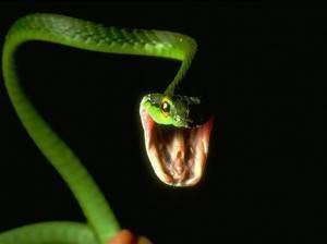 soñar-con-el-ataque-de-una-serpiente