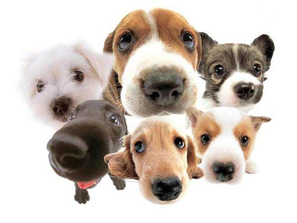 soñar-con-perros-que-te-rodean