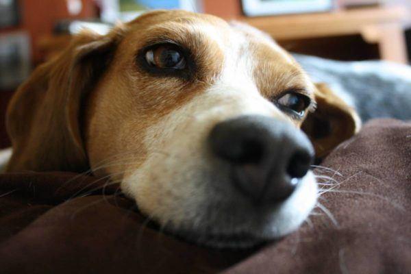 soñar-con-perros-significado