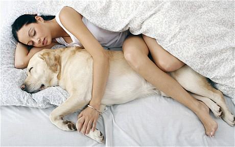 soñar-con-un-perro-a-tu-lado