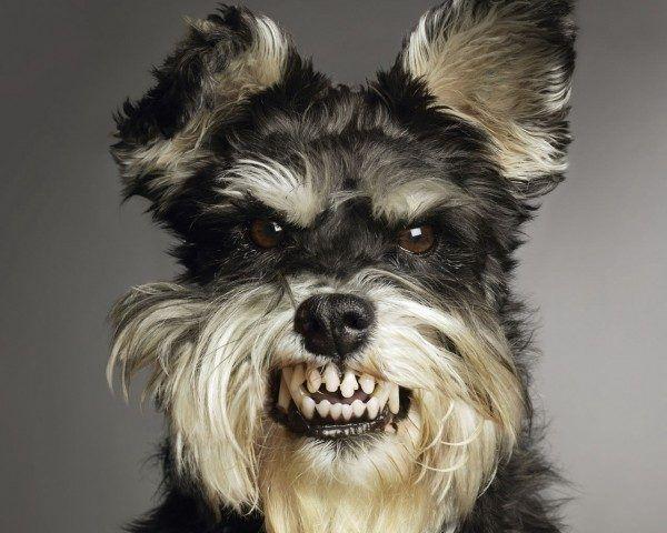 soñar-con-un-perro-furioso