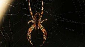 soñar-con-arañas