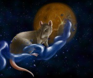 Horóscopo chino 2015 La Rata