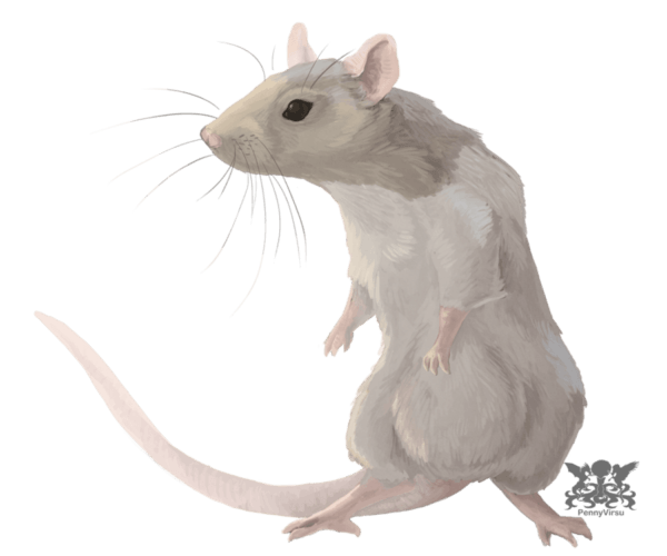 horoscopo-chino-2015-la-rata-trabajo