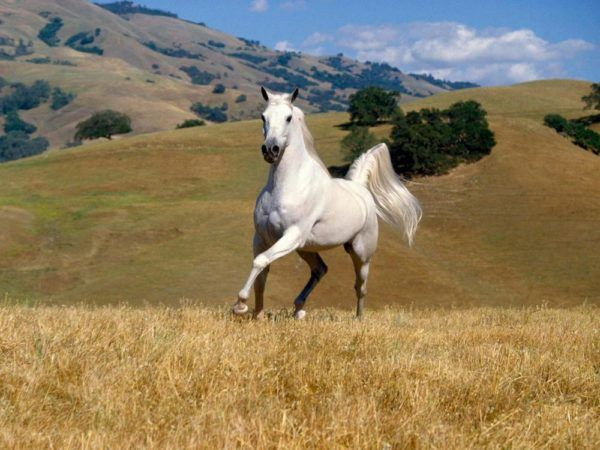 significado-de-los-suenos-animales-soñar-con-caballos