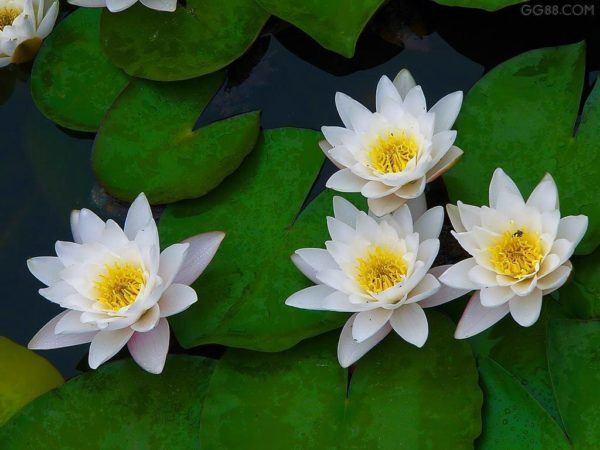 significado-de-los-suenos-cosas-soñar-con-flores