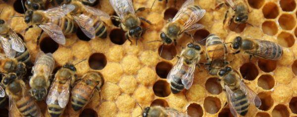 soñar-que-nos-persiguen-las-abejas