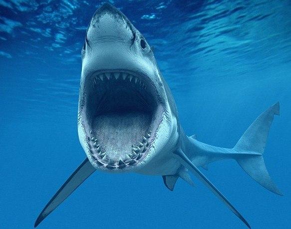 que-significa-soñar-con-un-tiburon-o-tiburones