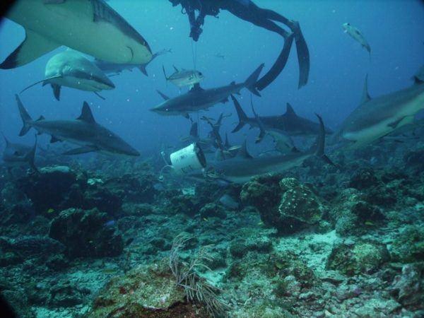 soñar-que-estamos-junto-a-varios-tiburones