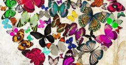 Símbolos del Feng Shui: mariposas para el amor 2019