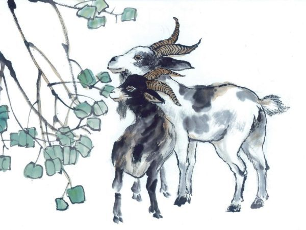 horoscopo-chino-2016-la-cabra