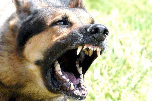 que-significa-sonar-con-perros-furiosos