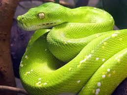 significado-soñar-serpientes-amarillas