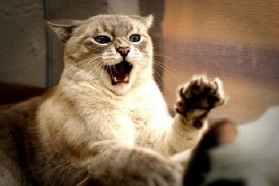 sonar-con-gatos-arana