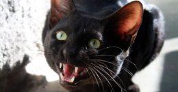 Soñar con gatos – Significado de soñar con gatos