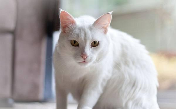 sonar-con-gatos-blancos