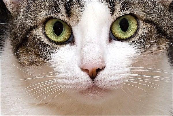 Soar con gatos  Significado de soar con gatos  Esoterismoscom