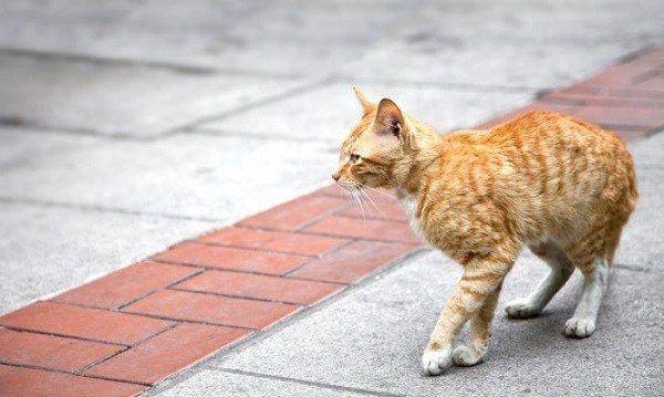 sonar-con-gatos-sucios-famelicos