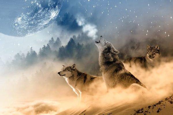 sonar-con-lobos