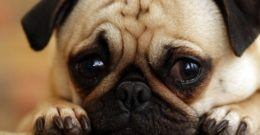 Soñar con perros – Qué significa soñar con perros