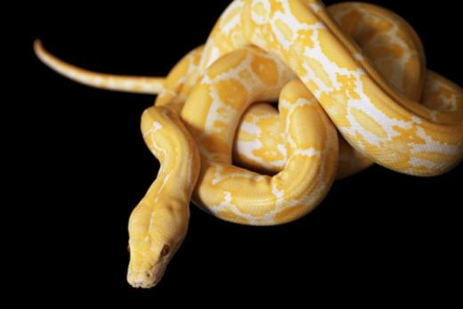 soñar-con-serpientes-significados