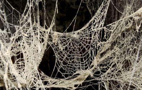 Significado de so ar con ara as - Como hacer tela de arana ...