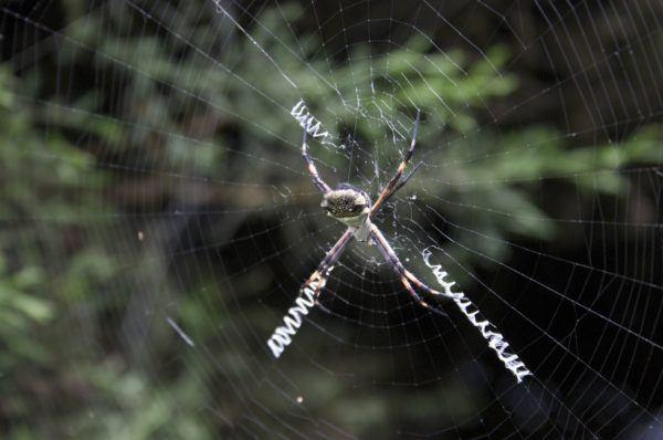 soñar-que-una-araña-te-pica