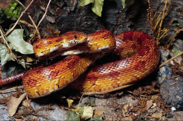 sueños-serpientes-significados