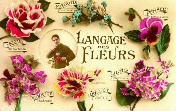 significado-de-las-71-flores-diccionario