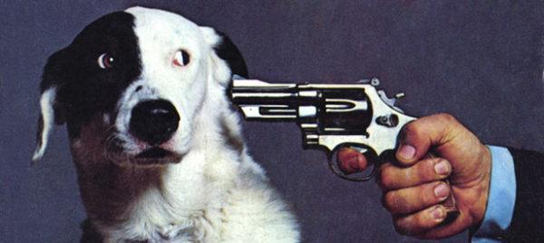 soñar-que-matamos-un-animal