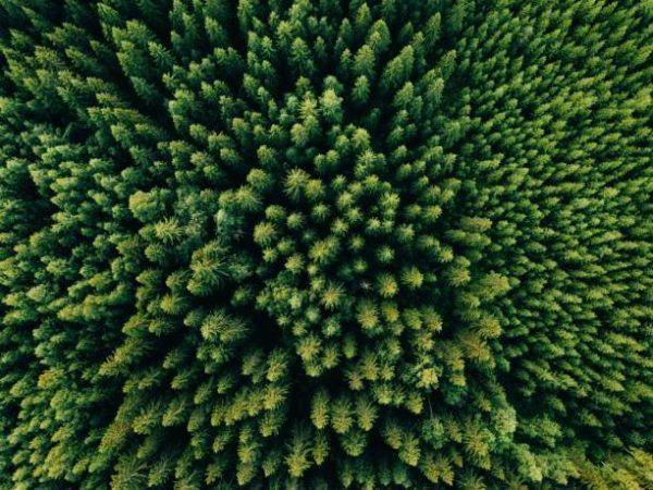 Soñar bosque