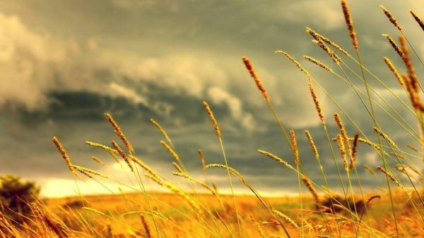 soñar con un campo muerto