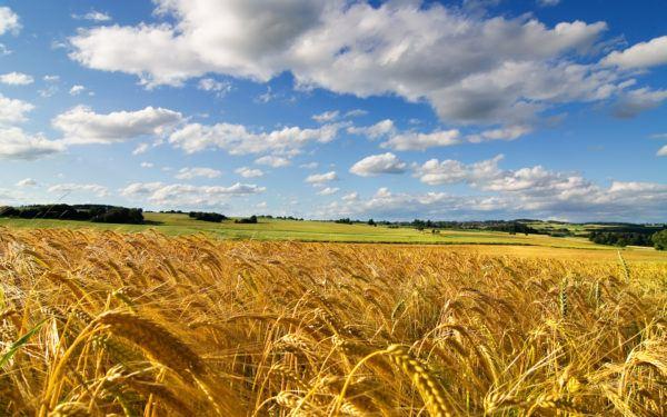 soñar un campo arado