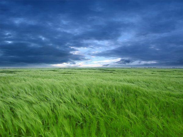 soñar un campo verde